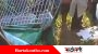 হবিগঞ্জের আমতলীতে সড়ক দুর্ঘটনায় শিক্ষিকার মৃত্যু, আহত ৪